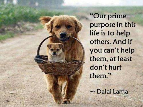 Words of Dalai Lama